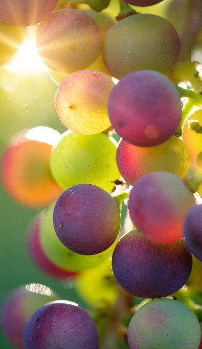 grapes-3550733_1280.jpg